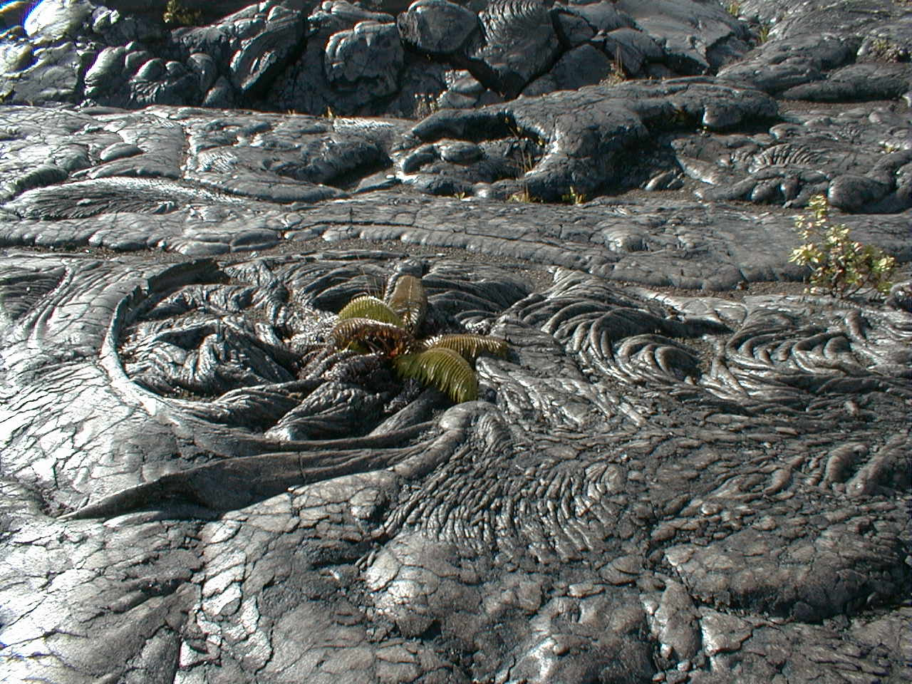 Global Hawaii Napau Crater Trail